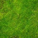 Green Moss — Stock Photo
