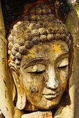 Head of wood Buddha in The Tree Roots, Thailand — Stock fotografie
