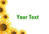 太陽の花のフレーム — ストック写真