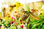 Mooie orchideeën — Stockfoto