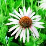 Summer wildflowers — Stock Photo #30528375