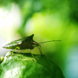 Insects on the lime green. — Stock Photo