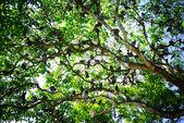 Tree with birds — Stock Photo