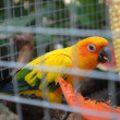 Stock Photo: Yellow parrot.