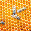 Bees honey cells — Foto Stock
