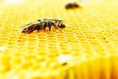 Bienen Honig Zellen — Stockfoto