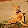 Kitten sunbathe — Stock Photo #41664135