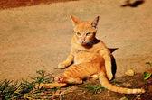 Kitten sunbathe — Stock Photo