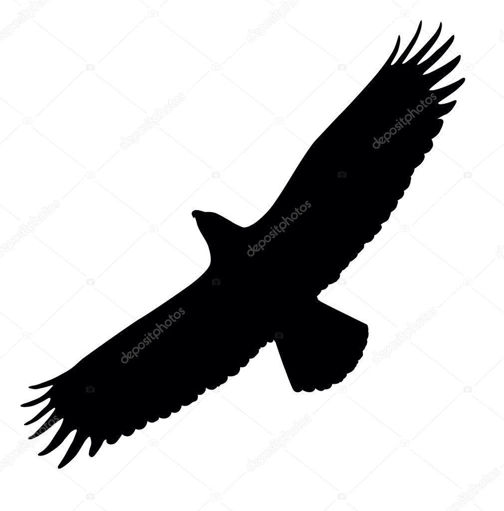 Silhouette of eagle flying Eagle Silhouette Vector