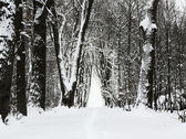 Winter park alley — Stock Photo