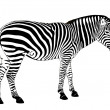 Stock Vector: Vector Zebra