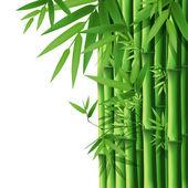 Bambou — Vecteur