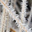 Hoarfrost on the straw — Stock Photo