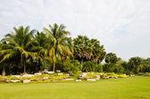Gatunków palm. — Zdjęcie stockowe