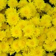 Yellow flower — Stockfoto #17602021