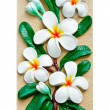 Stock Photo: Stucco images of frangipani flowers.