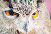 Eyes expression — Stock Photo
