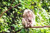 Monkey in Tropical rainforest. — Stockfoto