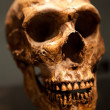 Old Skull — Stock Photo