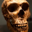 Old Skull - Stock Photo