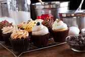 Variety of Gourmet Cupcakes — Stock Photo