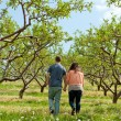 Couple Walking Through Apple Orchard - Stock Photo