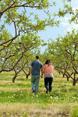 Couple Walking Through Apple Orchard — Stock Photo