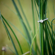 Diamond Engagement Ring in the Grass — Stock Photo