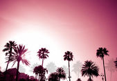 Palm Trees Sunset Retro — Stock Photo