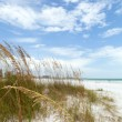 Stock Photo: Siesta Key Florida