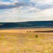 Steppe — Stock Photo #13957323