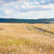 Steppe. Crimelandscape. — Stock Photo #14076266