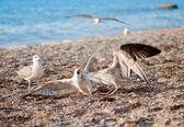 Seagulls on the beach — Stock Photo