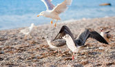 Seagulls on the beach — Stock Photo