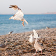 Seagulls on the beach - Stok fotoğraf