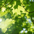 Green leaves - Stockfoto