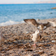 Seagulls on the beach - Photo