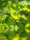 Green leaves and water surface — Stock Photo