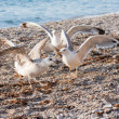 Seagulls on the beach - Stockfoto