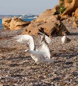 Seagulls on the beach — Стоковое фото