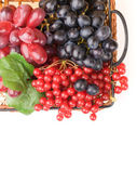 Fresh cranberries and grapes in basket isolated on white backgro — Stockfoto