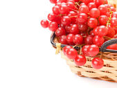 Fresh cranberries in basket isolated on white background — 图库照片