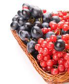 Fresh cranberries and grapes in basket isolated on white backgro — ストック写真