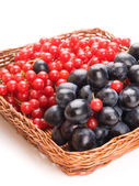 Fresh cranberries and grapes in basket isolated on white backgro — Stock Photo