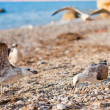 Seagulls on the beach - Stock Photo