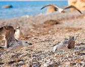 Sahildeki martılar — Stok fotoğraf