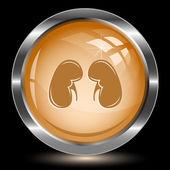 Kidneys. Internet button — Stock Vector