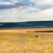 Steppe — Stock Photo #41559535
