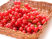 Fresh cranberries in basket isolated on white background — Stock Photo