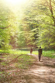 Hike in deep forest — Stock Photo